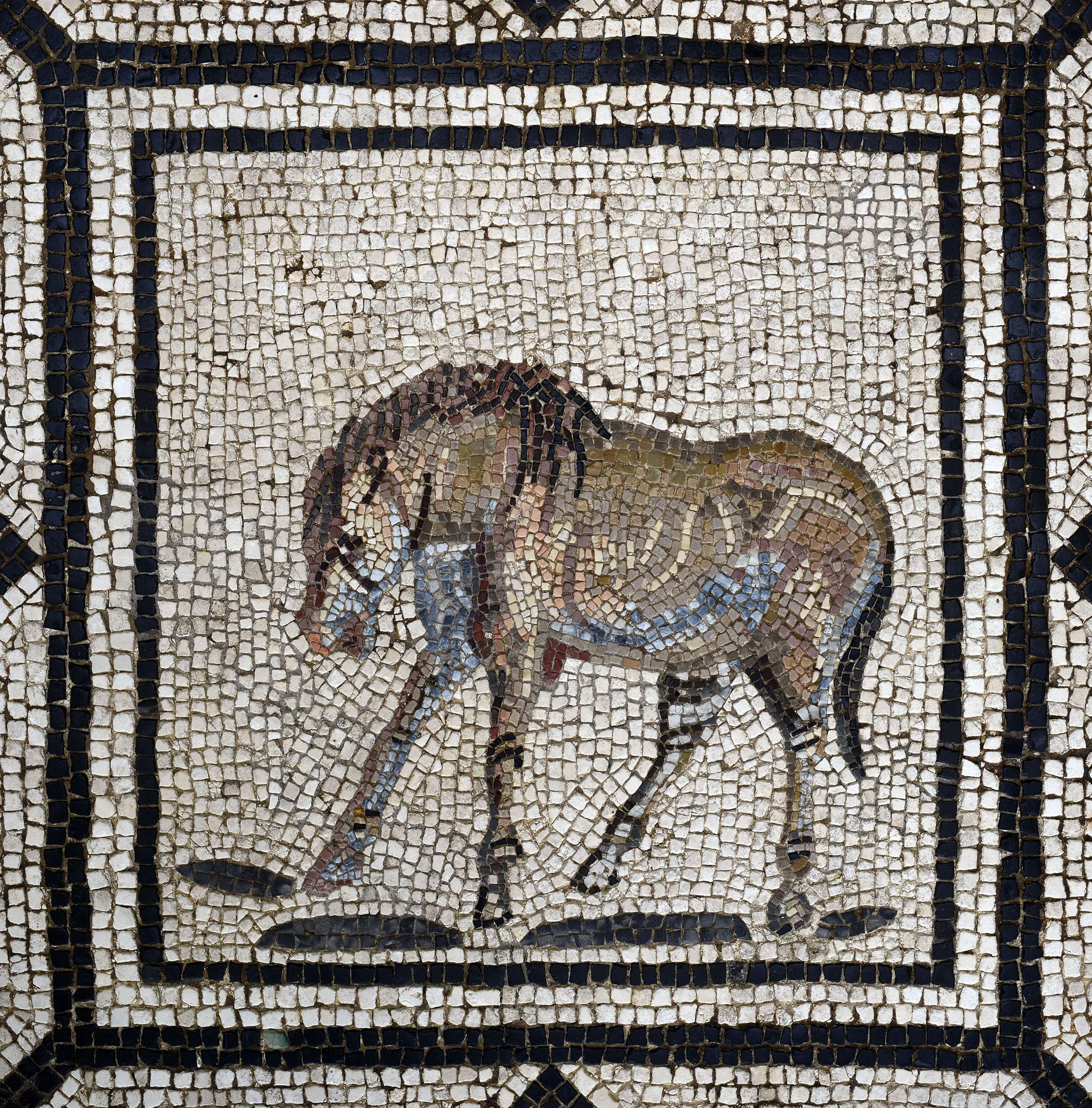 Mosaïque d'Orphée (Cheval)  ©Paul Veysseyre.