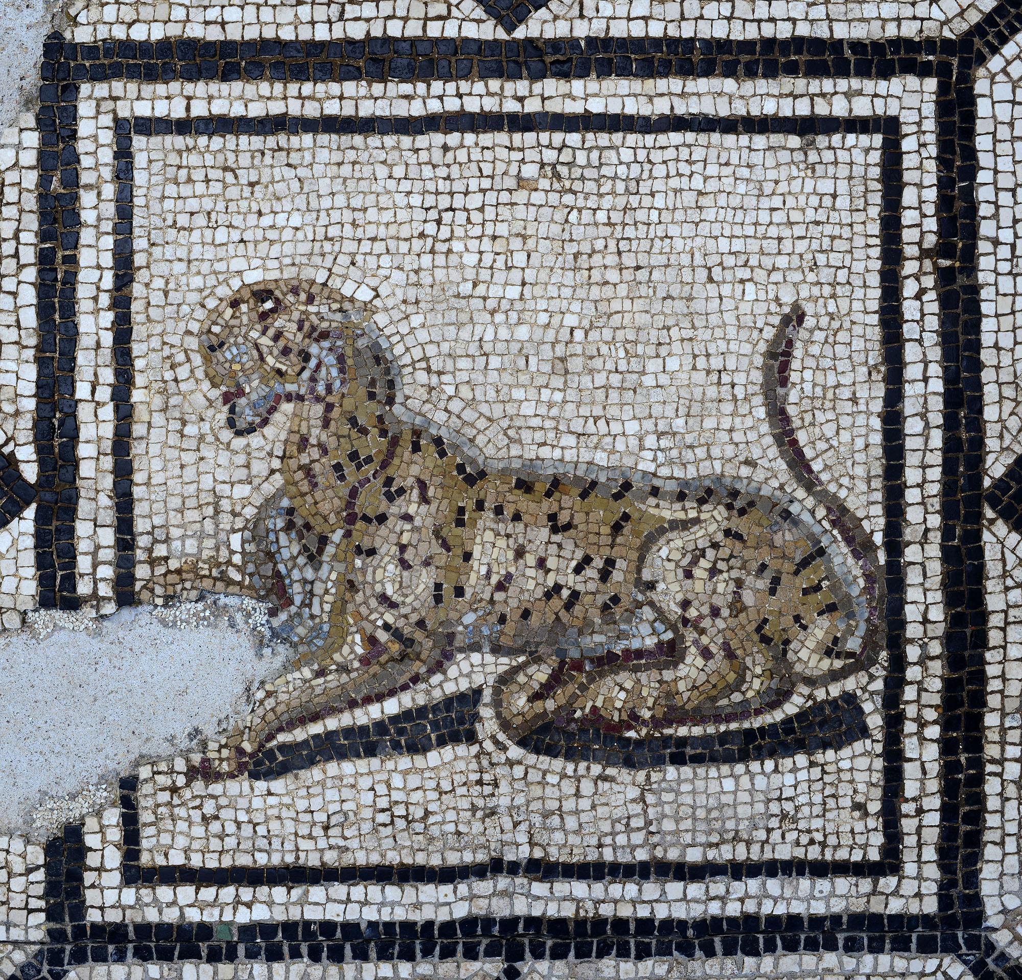 Mosaïque d'Orphée  (Panthère) © Paul Veysseyre.